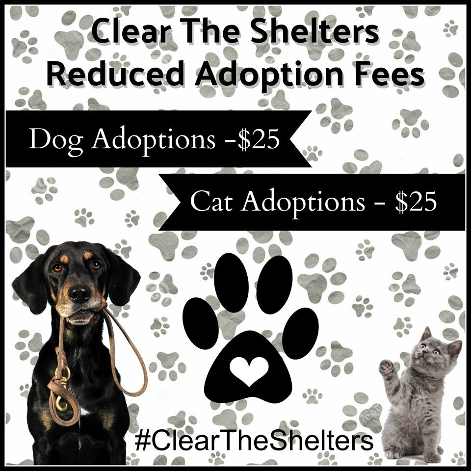 Clear the Shelters Caddo Animal Shelter_1502814904410.jpg