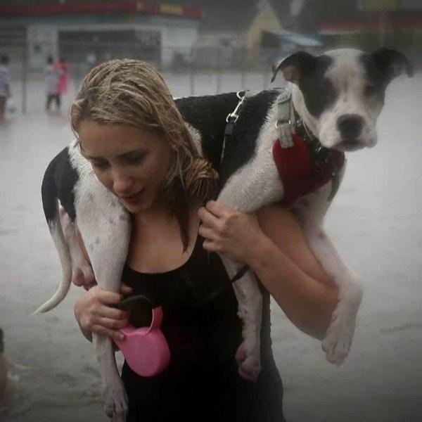 Harvey dogs_1504302374026.jpg