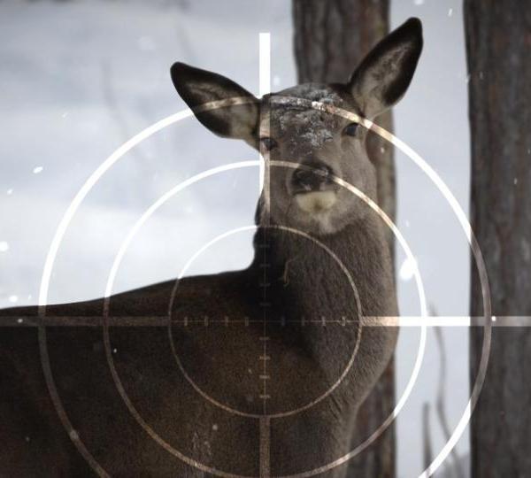Deer+Hunting+-+MGN_1508632640990.jpg