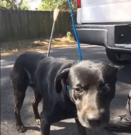 Dog shot by arrows finds home 10.26.17_1509031419724.PNG