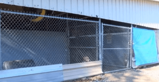 Animal shelter burglary 12.01.17_1512155249629.PNG