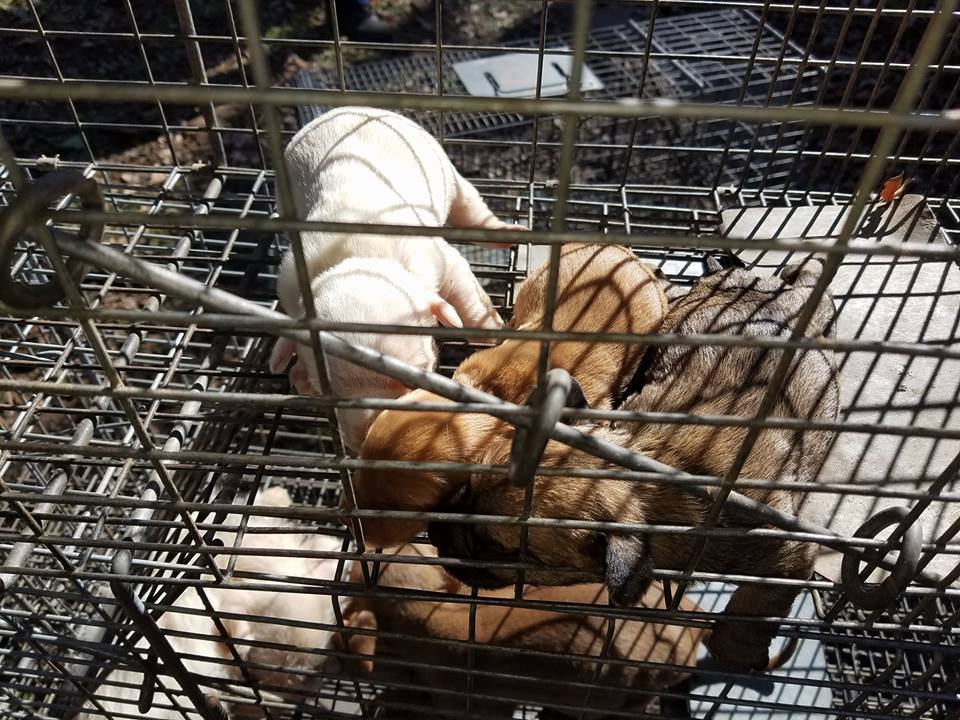 MPD animal cruelty_1517070747973.jpg.jpg