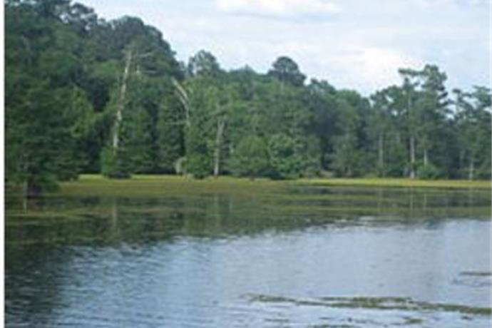 Drawdown scheduled for Lake Bistineau_6191384512346342487