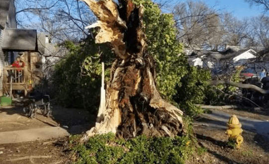 Teens crushed by tree 03.07.18_1520437454358.PNG.jpg