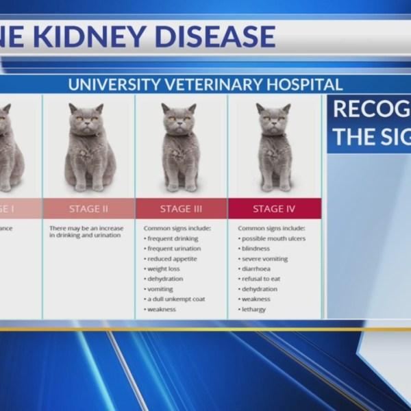feline_kidney_disease_0_20180417122123