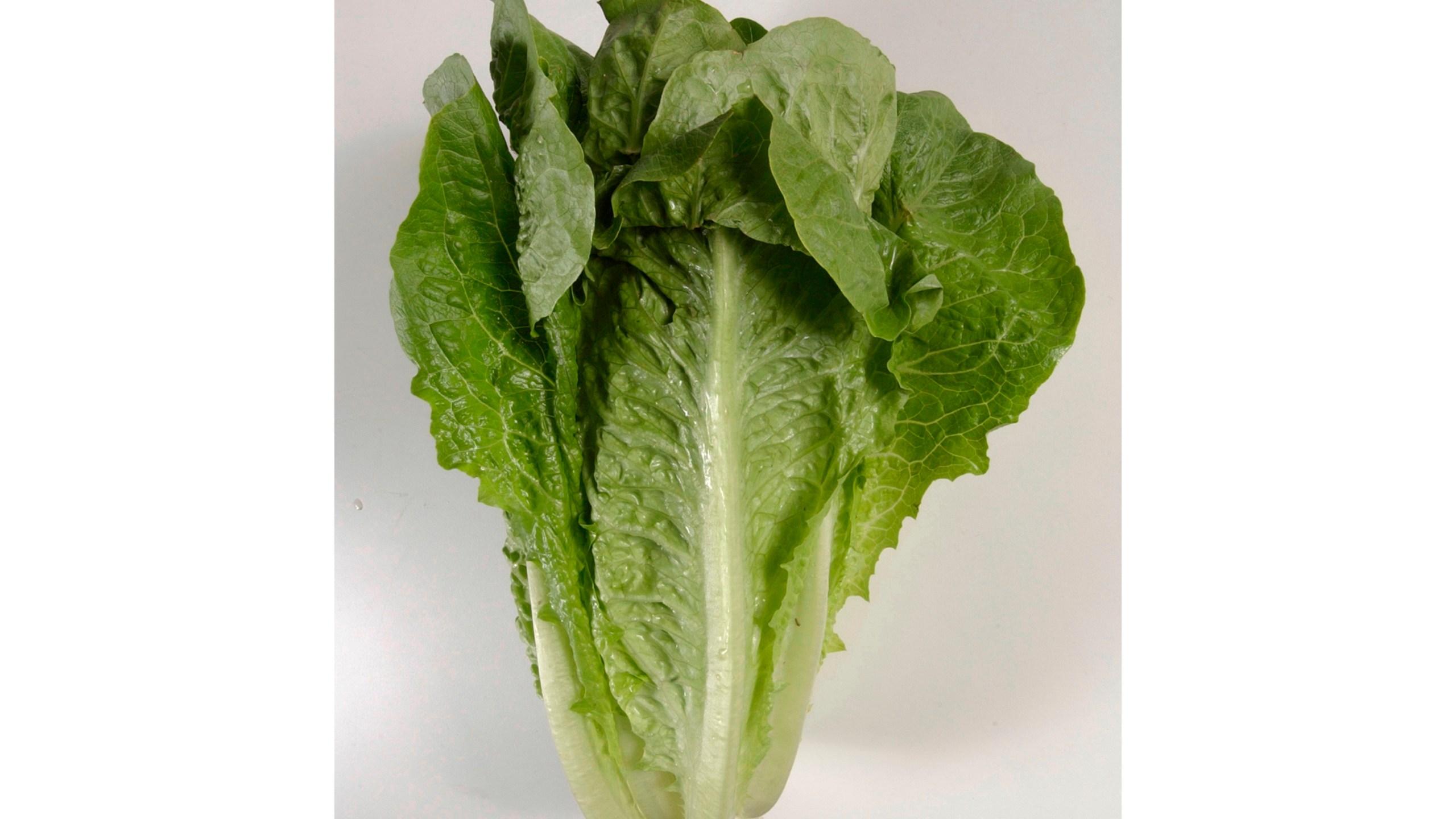 Lettuce_Outbreak_16426-159532.jpg50152903