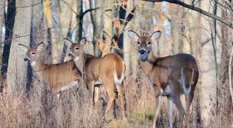 Deer hunting violations 09.20.18_1537458680752.PNG.jpg