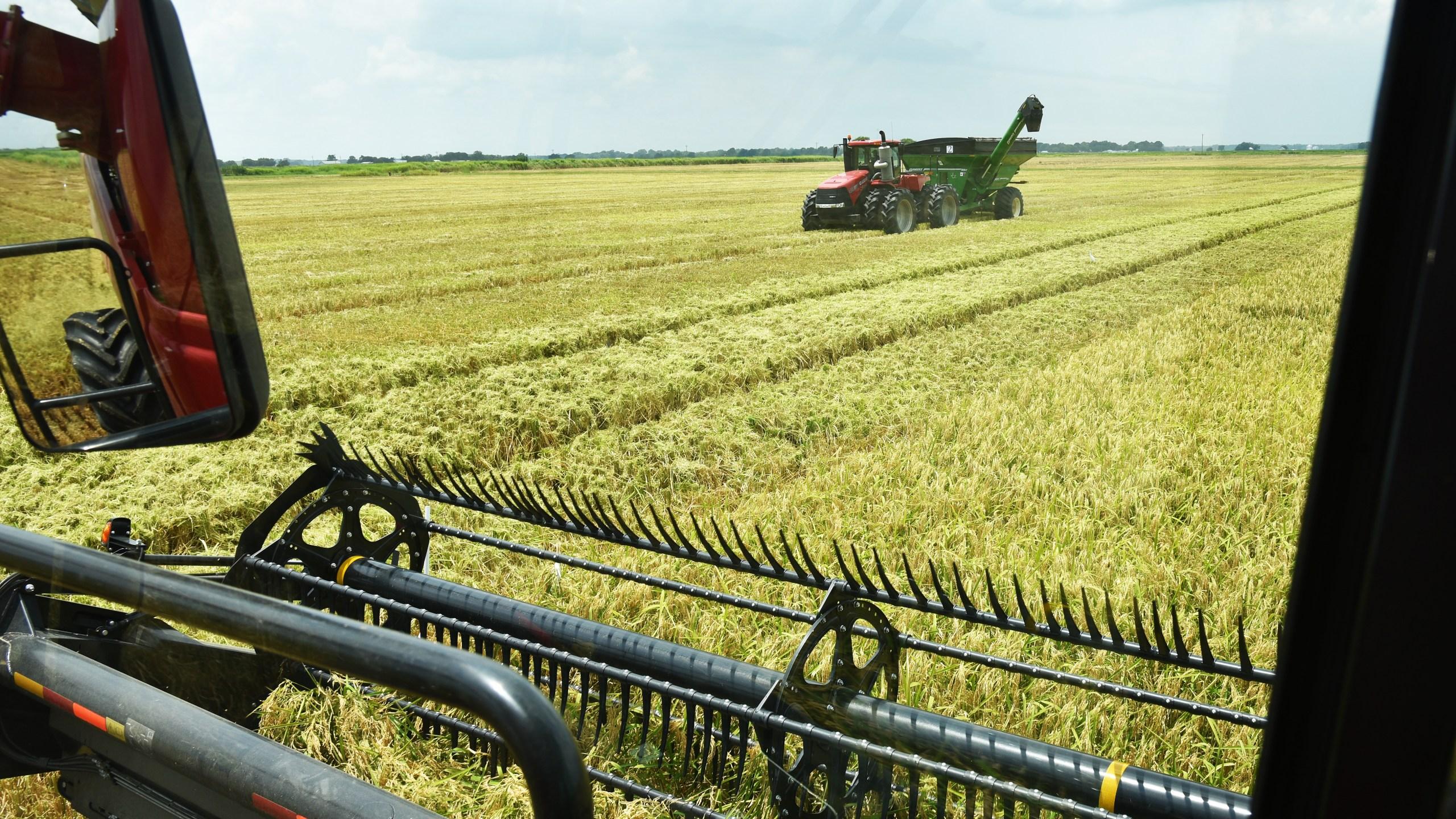 Rice harvest_1534870260152.jpg.jpg