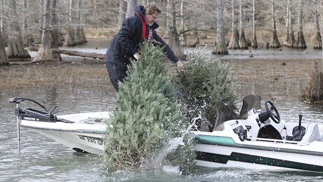 Christmas Trees for Fish Cover_1545852309618.jpg_65928566_ver1.0_640_360_1545869805265.jpg.jpg