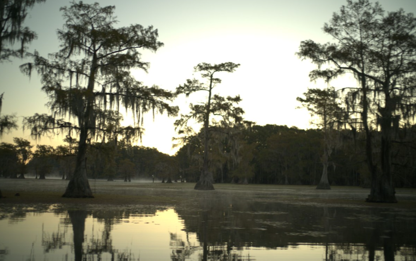 Caddo Lake on National Geographic 01.23.19_1548263672108.PNG.jpg