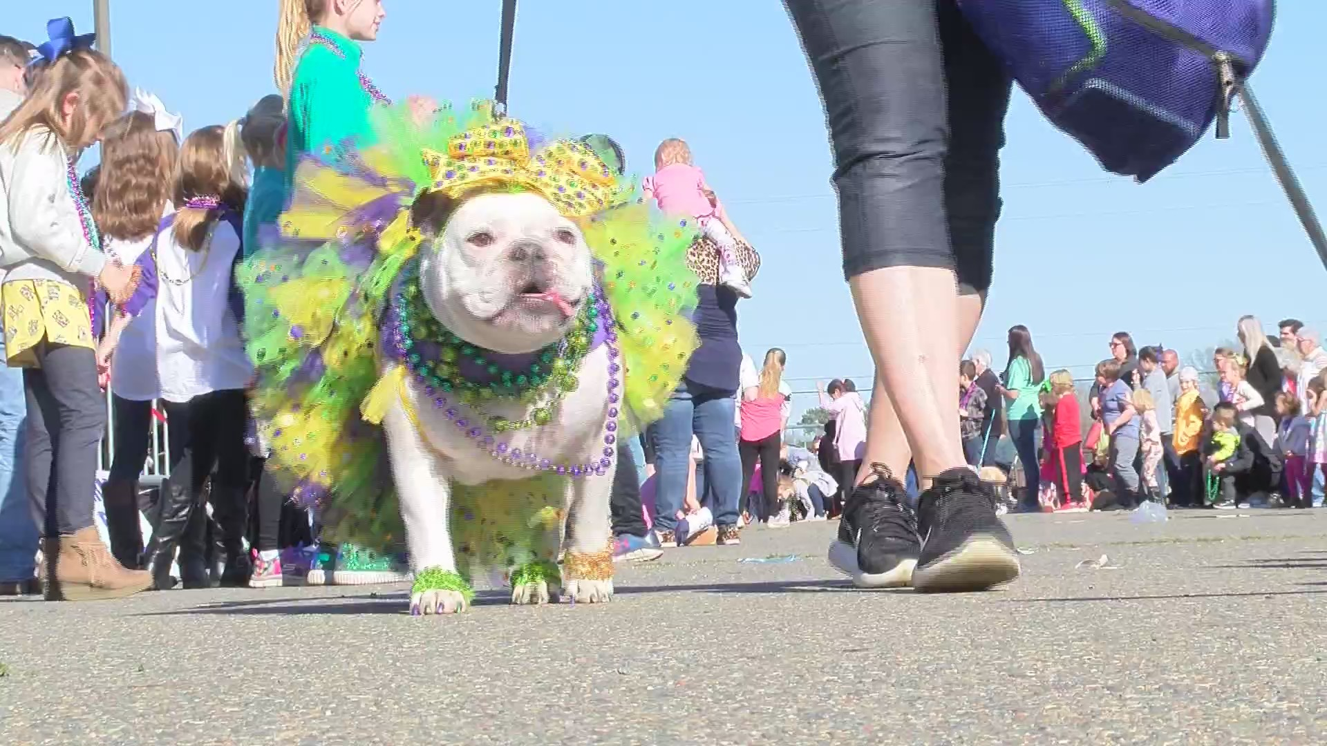 Krewe of Barkus and Meoux
