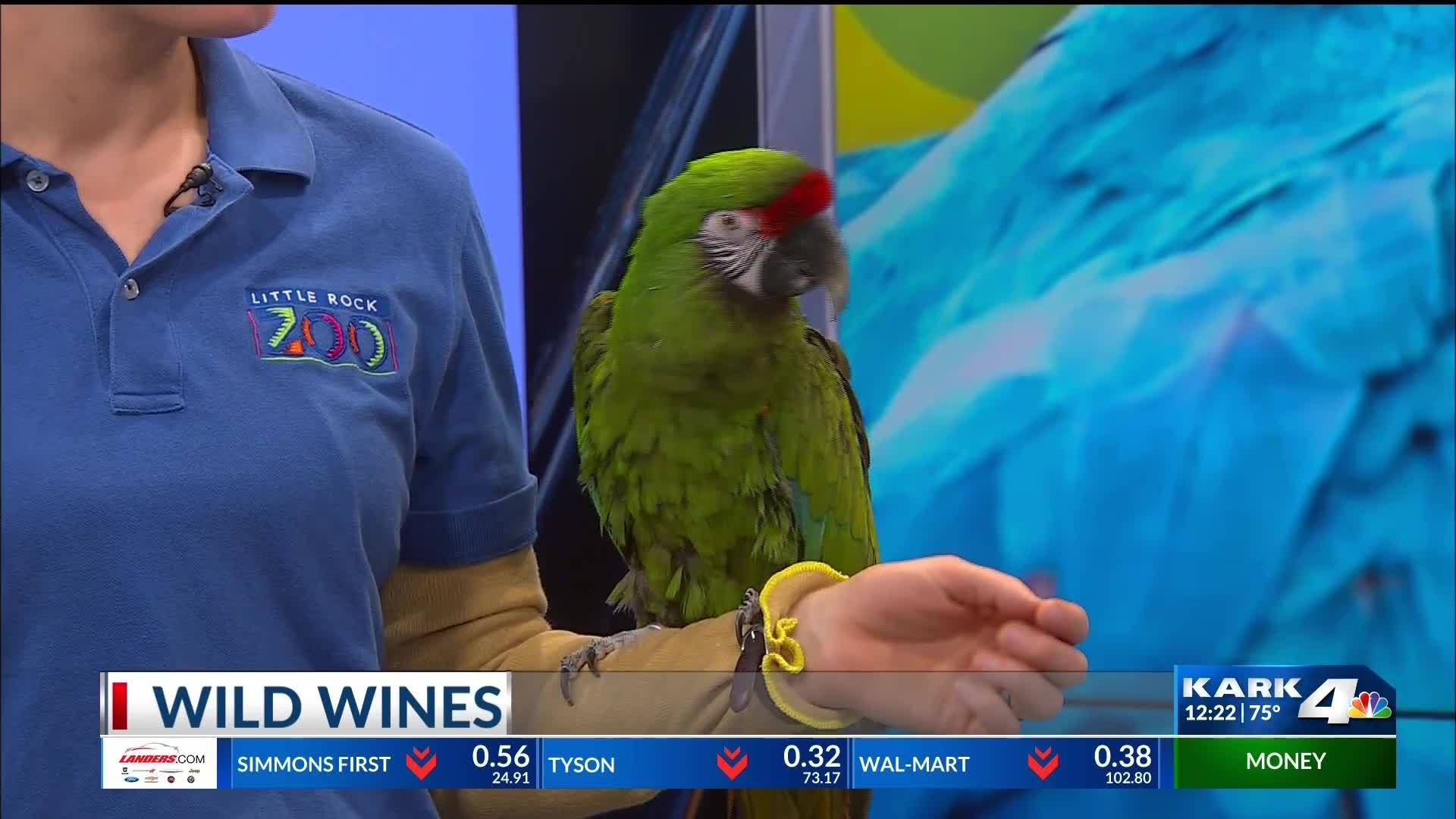 Little_Rock_Zoo__Wild_Wines_at_the_Zoo_8_20190422173233-118809306
