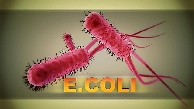 e coli ecoli cdc generic web ap_1554495892519.jpg-873703986.jpg