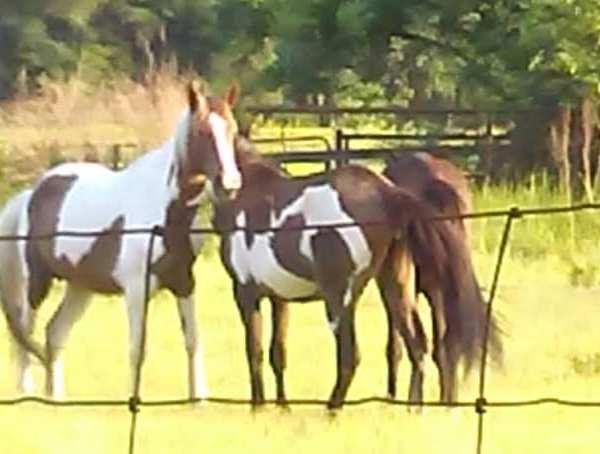 CPSO Horses