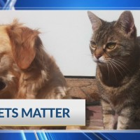 Pet Health: Hospice care for dogs and cats