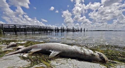 Red Tide, Dead Fish