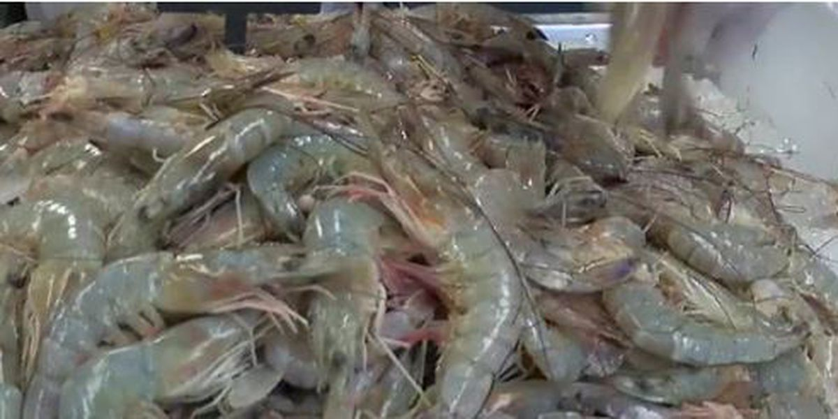 shrimp_1560717428943.jfif-842162556.jpg
